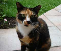 cat (from wikipedia)